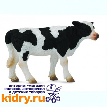 Фризский теленок - стоячий