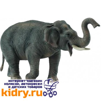 Азиатский слон, XL